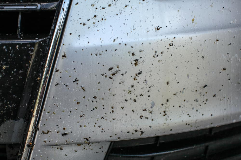 Dead bugs on car front bumper, covered with insect cleaning spray